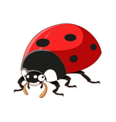 Cartoon smiling ladybird vector