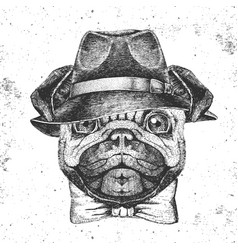 hipster animal pug-dog with hat hand drawing vector image