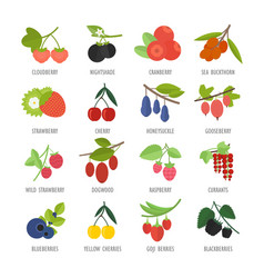 Set berries vector