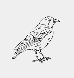 hand-drawn pencil graphics small bird vector image