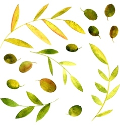 watercolor olives leaves and branches vector image