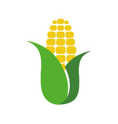 corn food symbol vector image