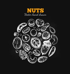 nuts and seeds collection 2 vector image