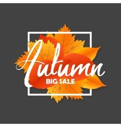 Autumn new season of sales and discounts deals vector image