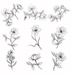 Collection elegant rustic plants for design vector