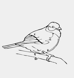 Hand-drawn pencil graphics small bird engraving vector