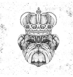 hipster animal bulldog in crown vector image