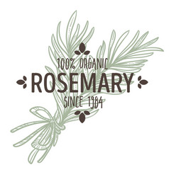 Rosemary isolated icon with lettering spice and vector