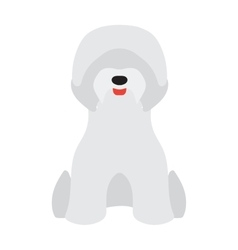 Adorable young poodle Yorkshire Terrier vector image