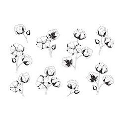 cotton flower set natural material floral vector image