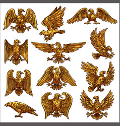 Golden eagle hawk falcon healdic birds prey vector