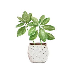Green houseplant in a pot watercolor vector
