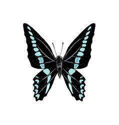 hand drawn graphium sarpedon butterfly vector image