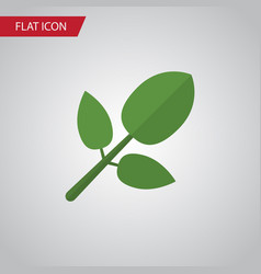 isolated hickory flat icon foliage element vector image