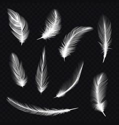 set bird feather on transparentfowl fur quill vector image