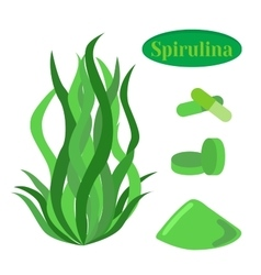 Set of spirulina sea weed algae in flat vector