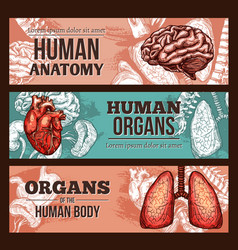Human organ anatomy sketch banner with body parts vector