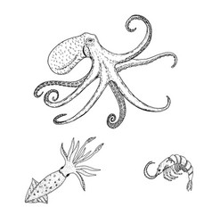 octopus vulgaris squid shrimp sea wildlife vector image