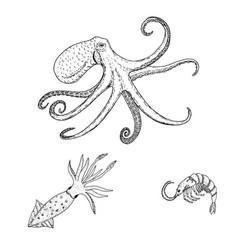 Octopus vulgaris squid shrimp sea wildlife vector