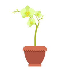 yellow oriental orchid on thin stem in clay pot vector image