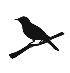 silhouette of the bird on branch vector image vector image