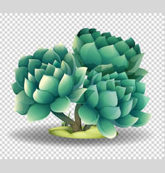 Cactus flower on transparent background vector