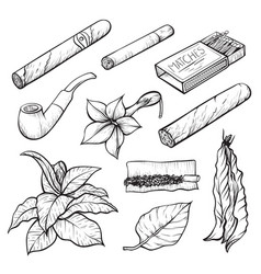 cigars and tobacco monochrome sketch vector image