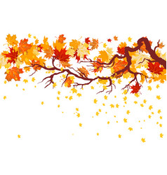 Fall maple branch vector
