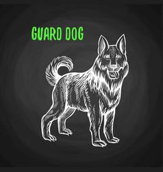Guard dog in chalk style on blackboard vector
