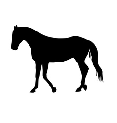 Horse Silhouette Isolated on a White vector image