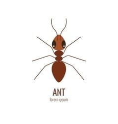 Colorfu cartoon ant logo vector image