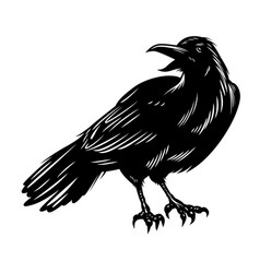 black raven isolated on white vector image