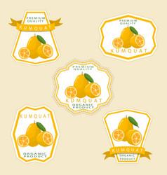 the theme kumquat vector image