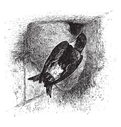 house martin vintage vector image