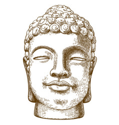 engraving drawing of stone buddha head vector image