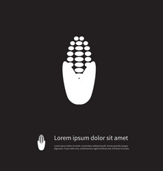 Isolated maize icon corny element can b vector