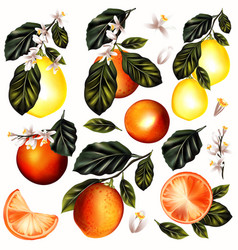 set of realistic lemon and oranges with flowers vector image