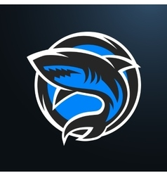 Shark sport logo on a dark background vector image