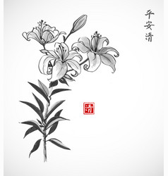 lily flowers on white background traditional vector image
