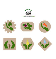 organic products from the farm vegetables flat vector image