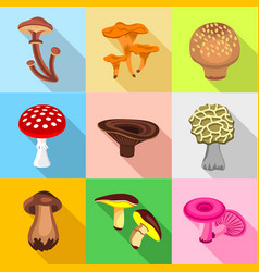 types of mushroom icons set flat style vector image