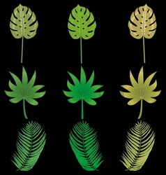 multicolored tropical leaves on a black background vector image