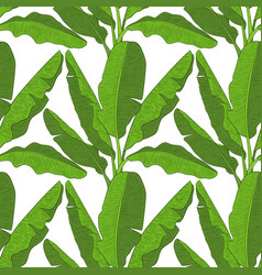 banana leaves vector image