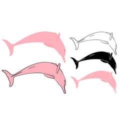 Boto cor de rosa in front view vector