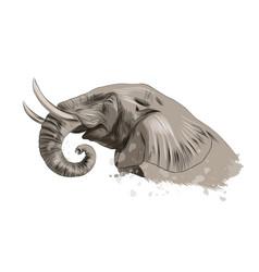 Elephant head portrait from a splash watercolor vector