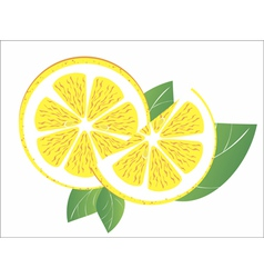 lemons on the white background vector image