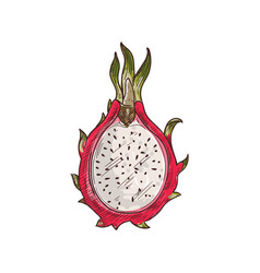 pitaya flesh with seeds isolated dragon fruit cut vector image