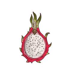 pitaya flesh with seeds isolated dragon fruit cut vector image