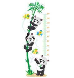 meter wall with bamboo tree and funny pandas vector image