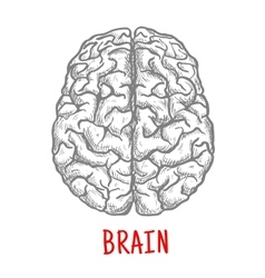 Top view of human brain sketch style vector image vector image